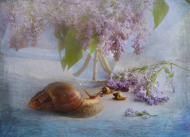 натюрморт,композиция,свет,весна,букет,улитки,сирень \