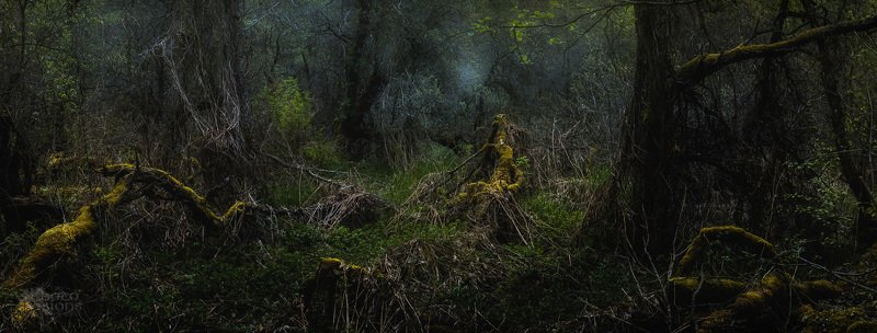 forest,woods,woodland,panorama,panoramic,norway,norwegian,moody,mood,dark,trees,tree,nature Ent worldphoto preview