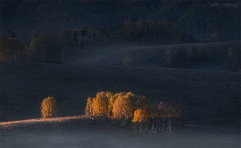 Алтай, Алтайский край, Чарыш, Тигирекский заповедник, осень, Когда включили свет ...photo preview