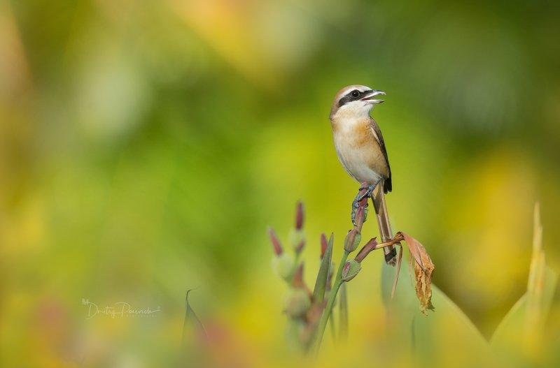 природа, животные, птицы, вьетнам, остров фукок Улыбка фото превью