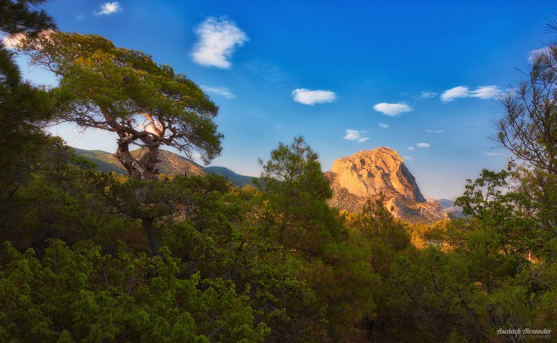 крым, новый свет, закат, деревья, солнце, небо В лучах закатаphoto preview