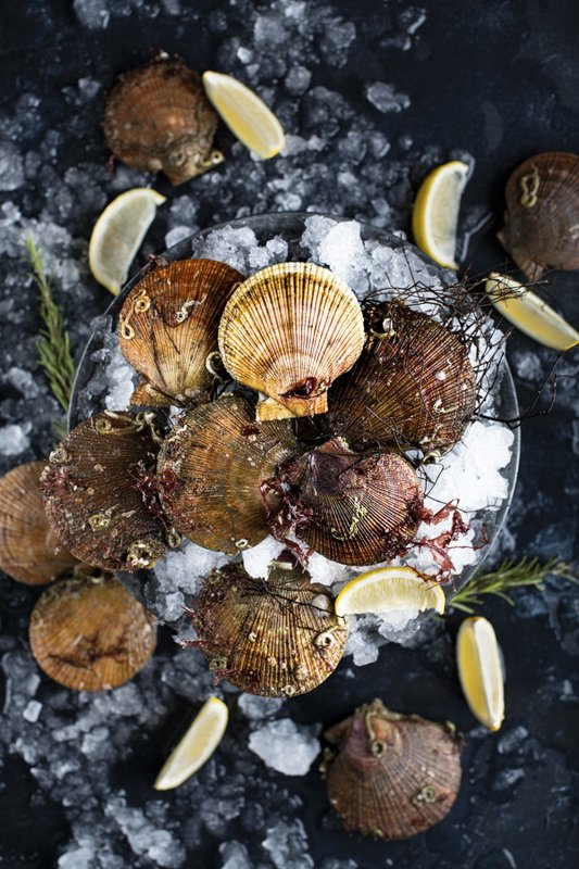 food photography fresh scallops seafood raw foodie still life flatlay Scallopsphoto preview