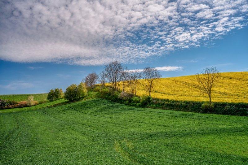 landscape Rural landscape with rapeseedphoto preview