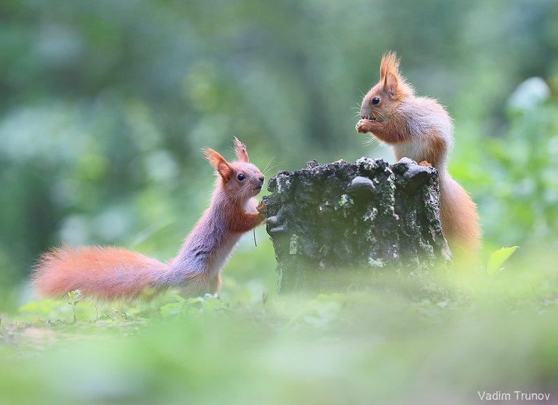 белка, бельчонок, весна, squirrel Бельчатаphoto preview