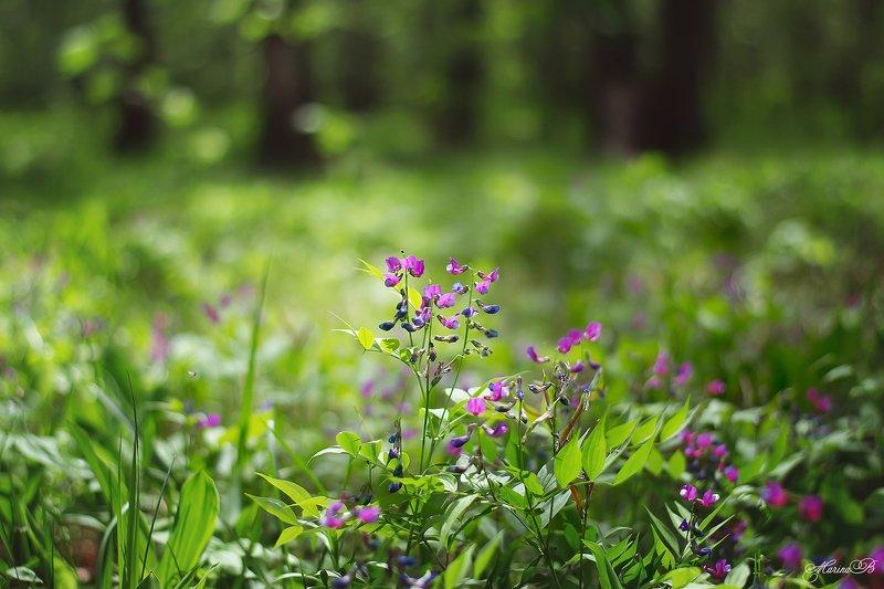 весна, зелень, лес, цветы Лесная сказкаphoto preview