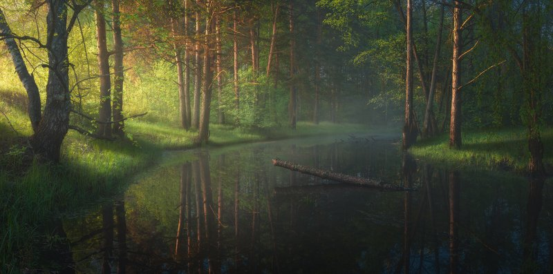 Утро на лесной речке photo preview