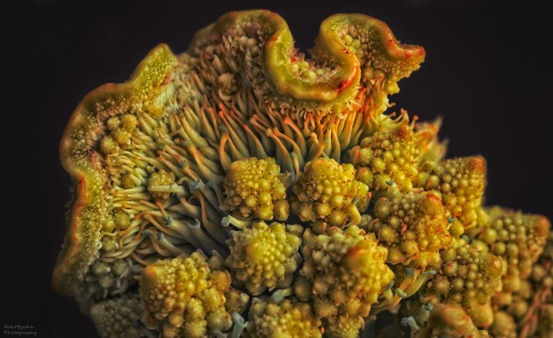 макро, природа, капуста, овощи, романеско, macro, nature, cabbage, vegetables, romanesco, Фантазии на тему капусты Романеско photo preview
