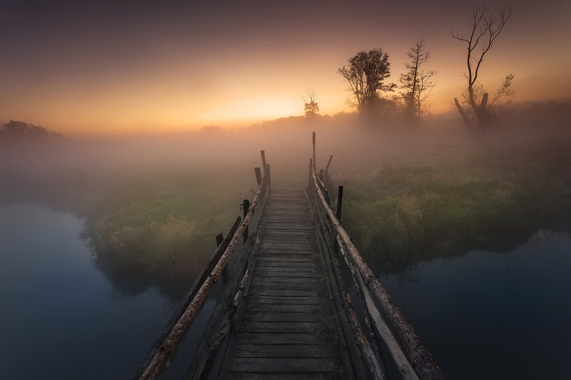 river, fog, tree, sunrise, water, River of the rising Sunphoto preview