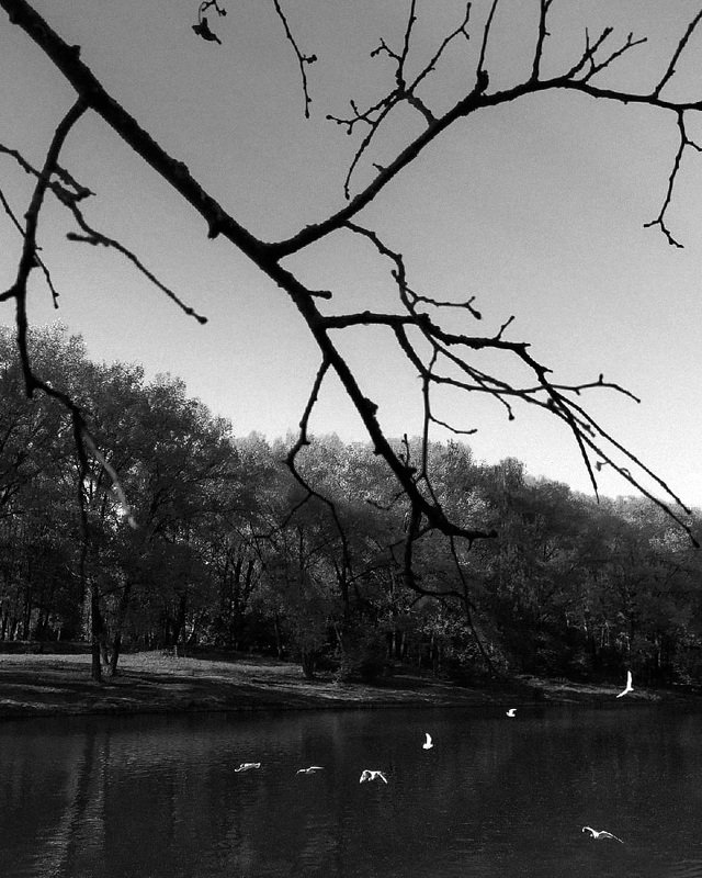 Чёрное на белом - белое на чёрномphoto preview