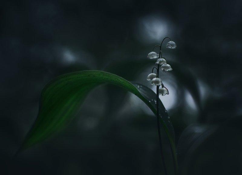 лес, свет, ландыш, природа ***photo preview