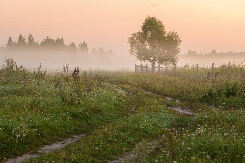 пейзаж,россия,рассвет,лето,туман,красота \