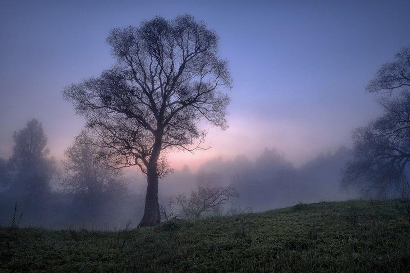 истра, река, дерево, пейзаж, рассвет, небо, туман, утро Дерево фото превью