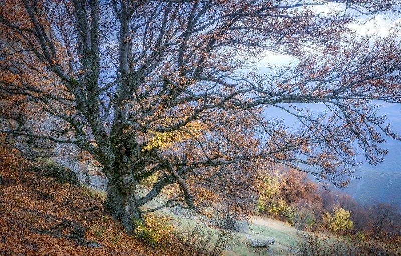 Холодная осень южной Демерджиphoto preview