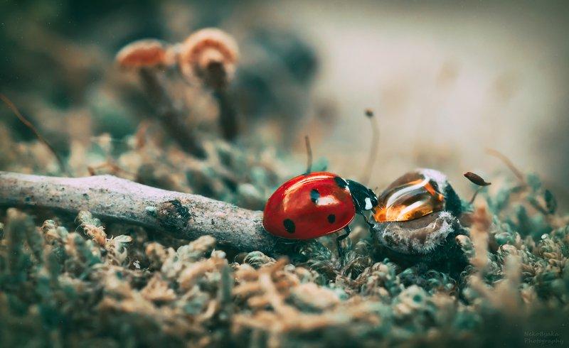 макро, природа, насекомые, божьи коровки, мох, macro, nature, insects, ladybugs, moss, \