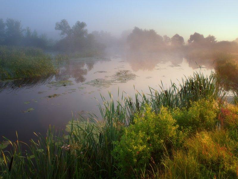 утро, волчья, река, туман, украина, пейзаж, природа, рассвет Раннее утроphoto preview