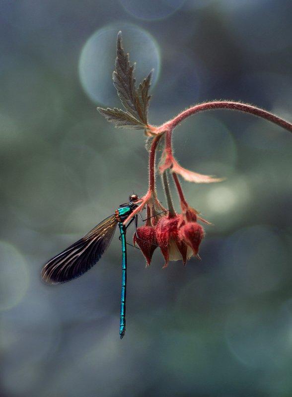 лес, свет, природа, стрекоза ***photo preview