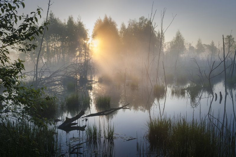 туман, московская область, утро, природа, пейзаж Рассветное волшебствоphoto preview