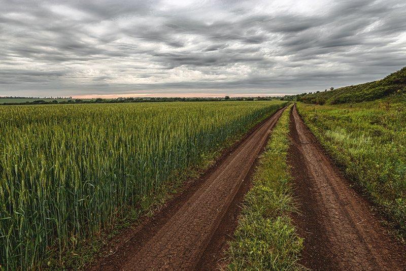 просёлок, просёлочная дорога, дорога, пейзаж, природа, поле, пшеница, облака Просёлокphoto preview