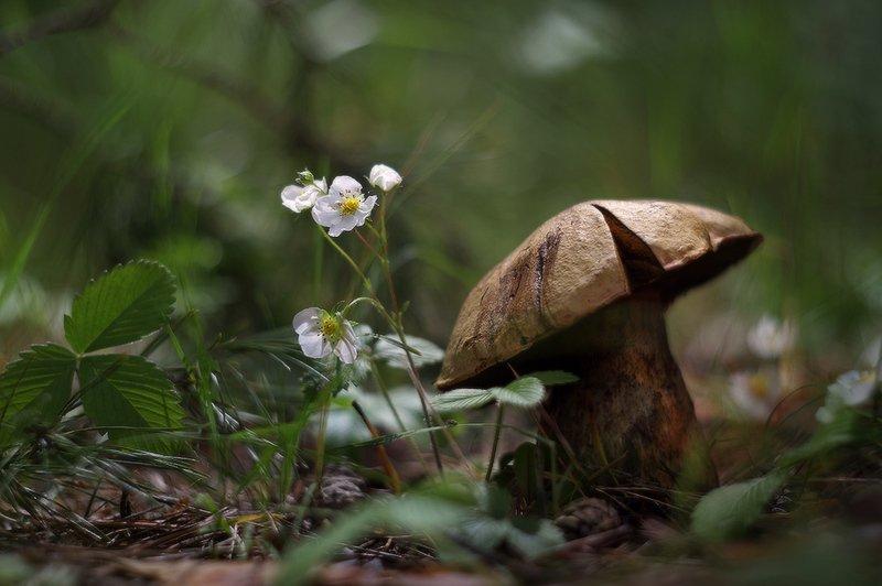 грибы, лето, солнце, гелиос40 Грибноеphoto preview