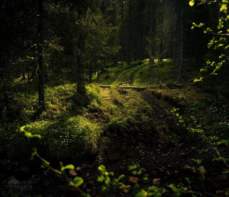 forest,woodland,woods,norway,boreal,norwegian,light,spring,springtime Spring lightphoto preview