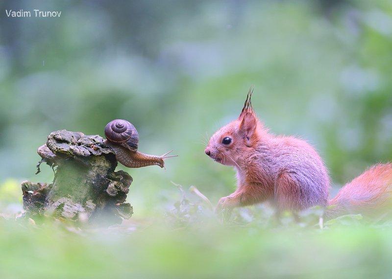 белка, улитка, squirrel, бельчонок Забодаю. Укушу.photo preview