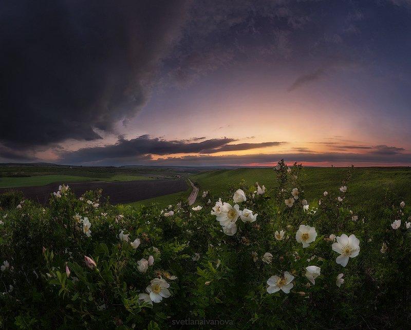 Вдыхая аромат весны...photo preview