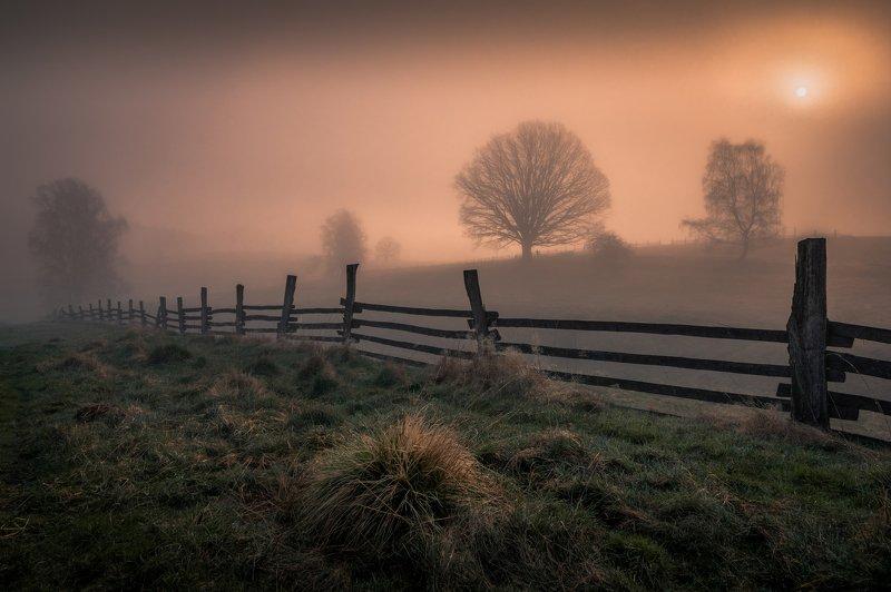 landscape, tree, trees, light, fog, mist, sun, sunrise, nature, meadows, fence, spring,  In the veil of lightphoto preview