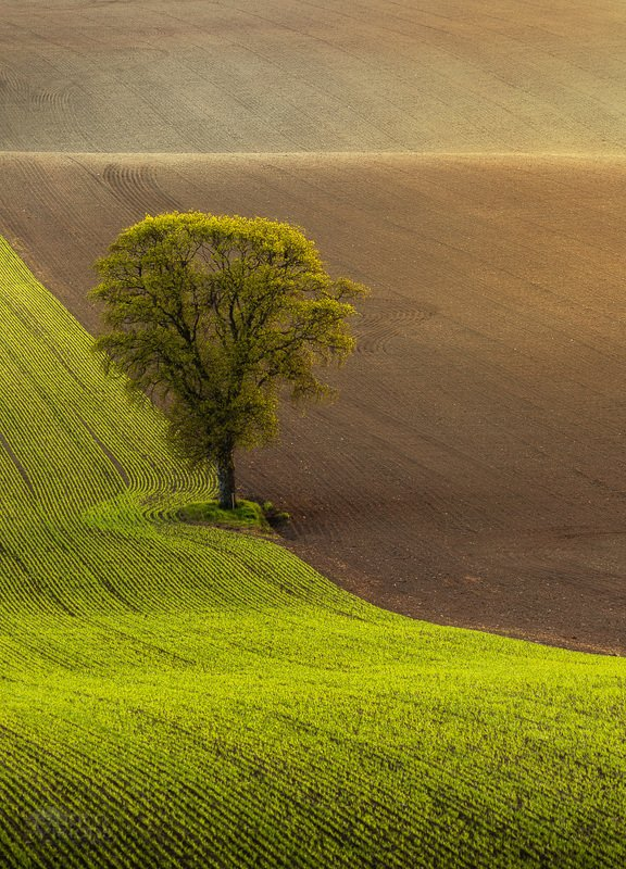 tree,springtime,lonely,field,color,norway,norwegian, Spring treephoto preview
