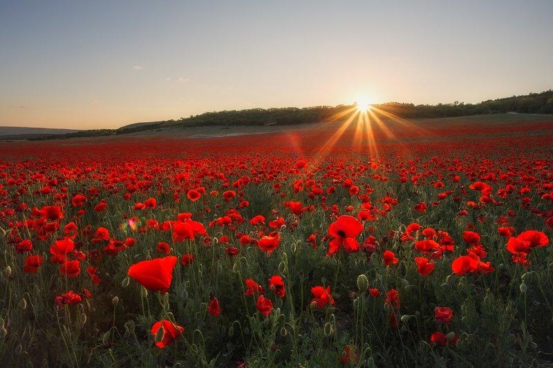 крым, маки, маковое поле, севастополь, весна, лето, поле, закат, путешествие, пейзаж, цветы, вечер, вечерний пейзаж Закат в макахphoto preview