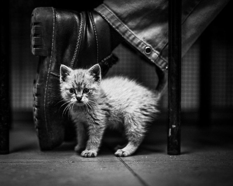 Cat следующем обувиphoto preview