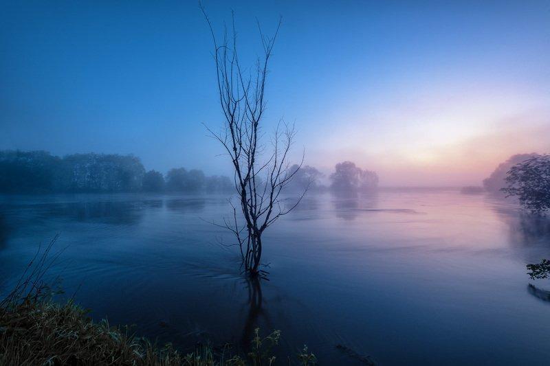 протва, река, наводнение, утро, рассвет, туман, дерево, силуэт Наводнение фото превью