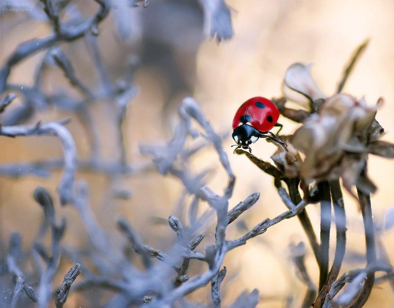 макро, природа, растения, насекомые, божья коровка, боке, macro, nature, plants, insects, ladybug, bokeh, Загадочный лесphoto preview
