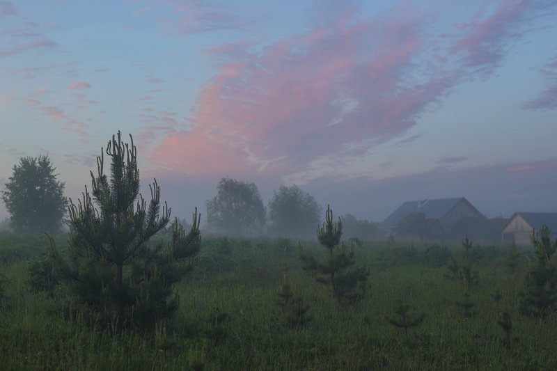 утро туман деревня поле сосенки Светаетphoto preview