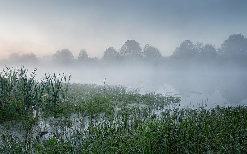 природа утро солнце туман озеро берег трава утренняя прохладаphoto preview