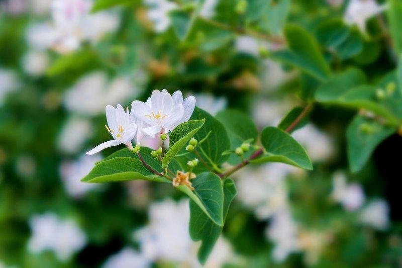 весна, цветы  Не обычное рядом. photo preview