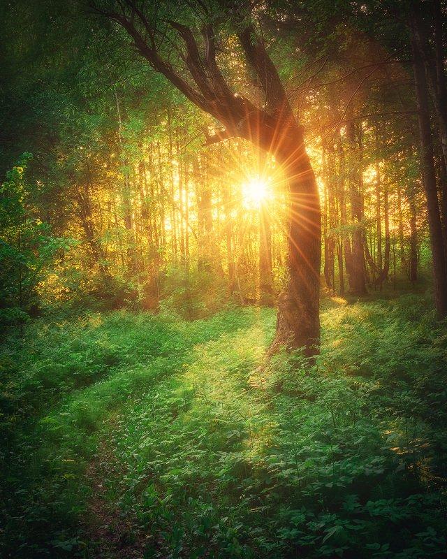 Лес, дерево, солнце, пейзаж, Пермский край, закат, вечер Magical forestphoto preview