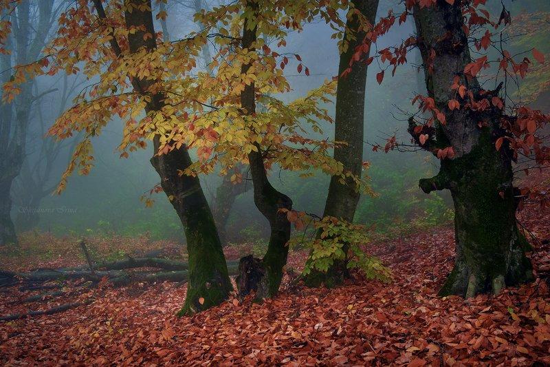 Вспоминая осень...photo preview