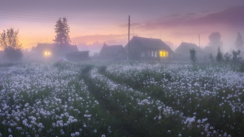 туман, цветы, деревня, дорога Одуванчиковые сумеркиphoto preview