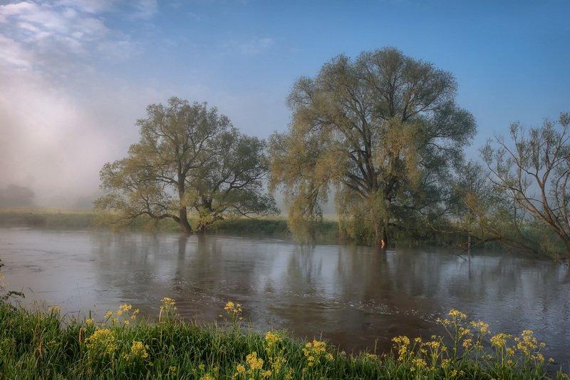 протва, река, наводнение, утро, рассвет, туман, деревья, поток В потоке фото превью