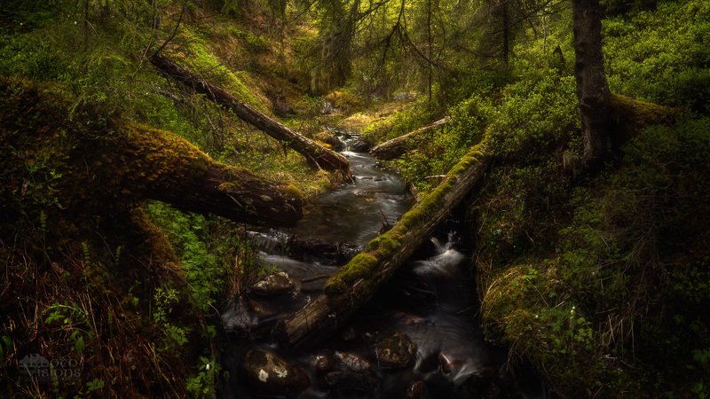 norway,norwegian,nature,forest,tree,trees,woodland,woodlands,spring, Woodland explorphoto preview