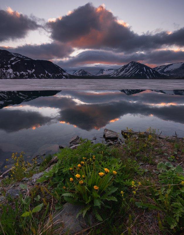 пейзаж,хибиногорск,озро,лето,полярный день,отражение,горы,снег,цветы,закат,рассвет Большой вудьявр фото превью