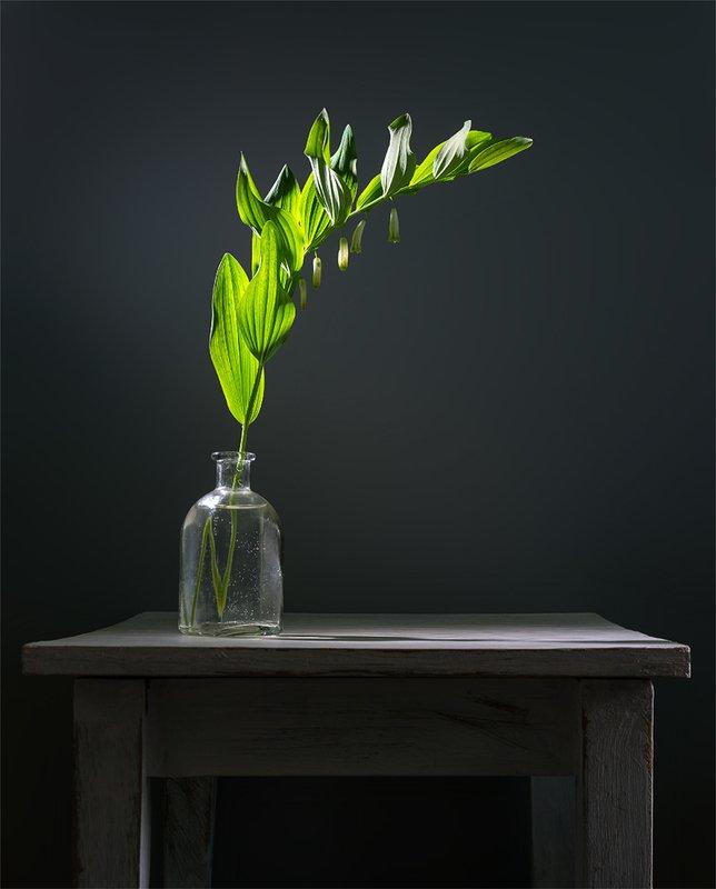 still life, натюрморт,    винтаж,    цветы,  весна, ветка, минимализм, свет, тень натюрморт с веточкойphoto preview