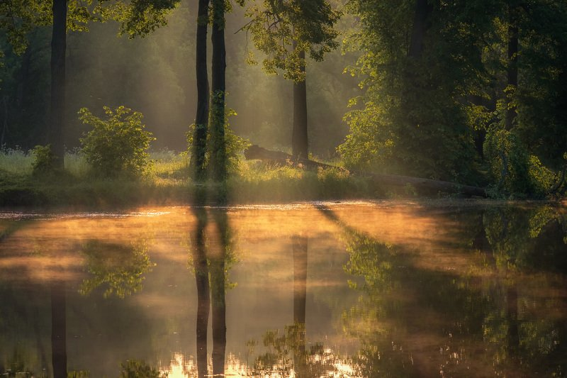 середниково, барский, пруд, рассвет, туман, вода, деревья, лето, солнце, лучи Солнце встало фото превью