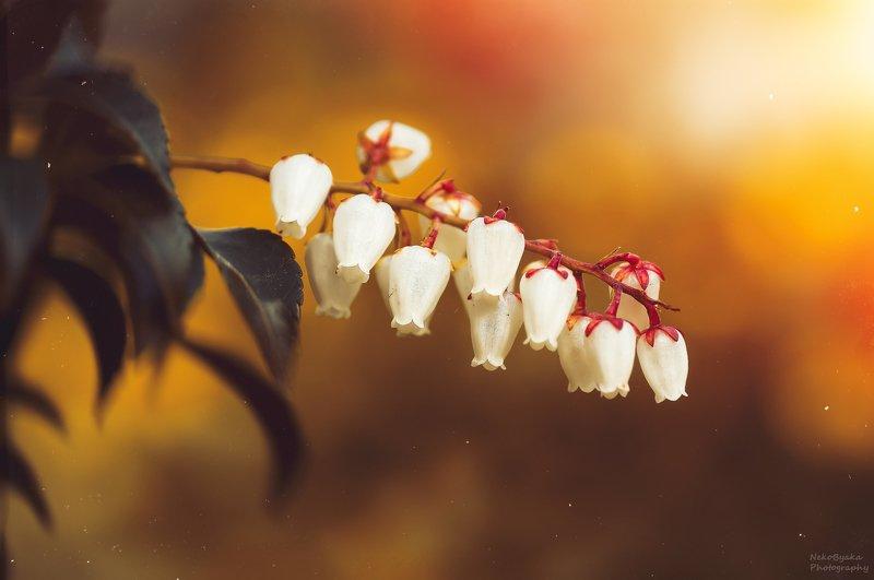 макро, природа, весна, цветы, боке, macro, nature, spring, flowers, bokeh, Цветочная подборкаphoto preview