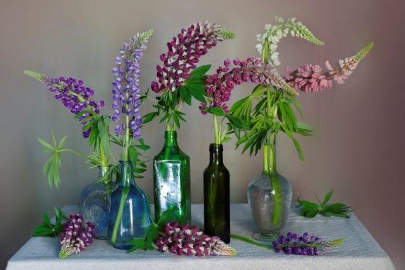люпин,натюрморт,цветы,весна,вера павлухина, Люпиновый сериалphoto preview
