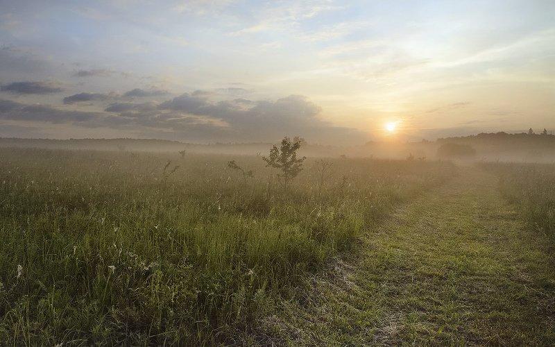 Летнее утро.photo preview