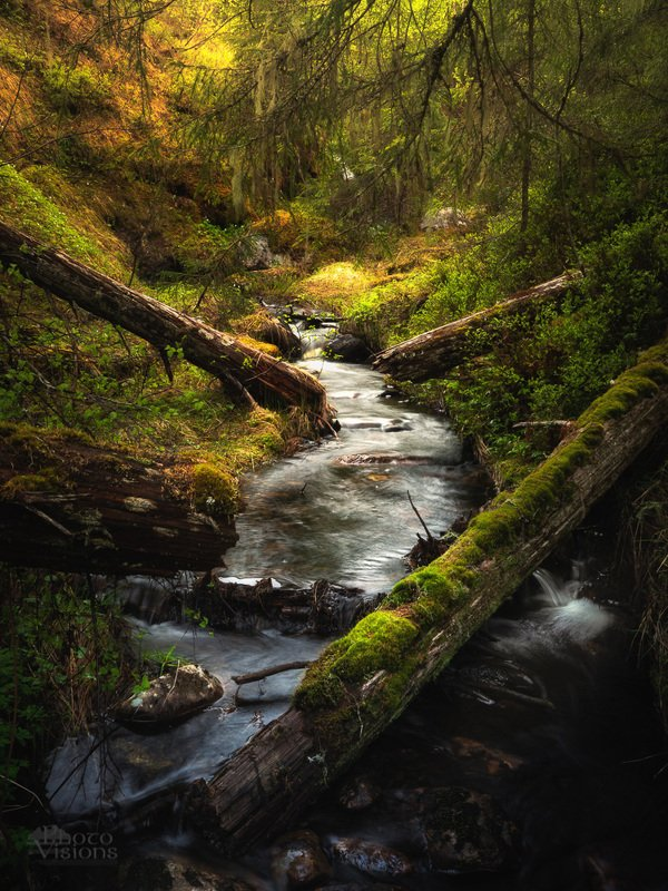 forest,woodlands,woods,trees,river,nature,norway,norwegian,spring,springtime, The forestphoto preview