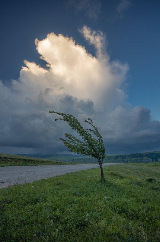 гора, небо, плато, облака, утро, тучи, непогода, дерево, гроза ТАНЕЦ ДЛЯ ДВОИХphoto preview