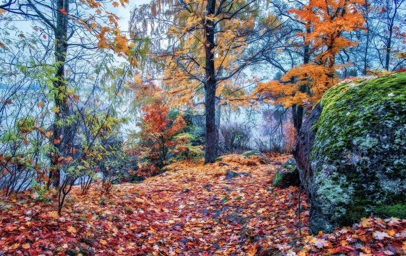 пейзаж,осень,парк,камни.листья.туман Осень.photo preview