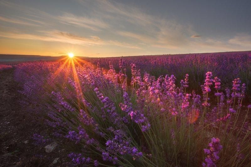 крым, маки, лавандовое поле, бахчисарай, лето, поле, рассвет, путешествие, пейзаж, цветы, утро, утренний пейзаж, солнце, восход солнца Рассвет в поле лавандыphoto preview